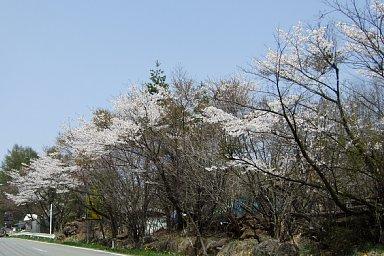 2010-05-04-03.JPG