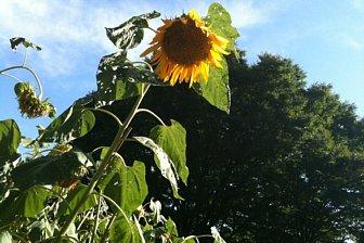 2010-08-09-02.jpg