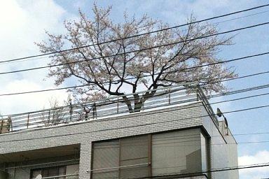 2011-04-10-04.jpg