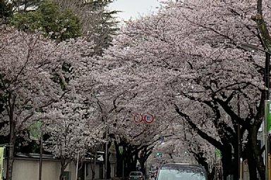 2019-03-30-03.JPG